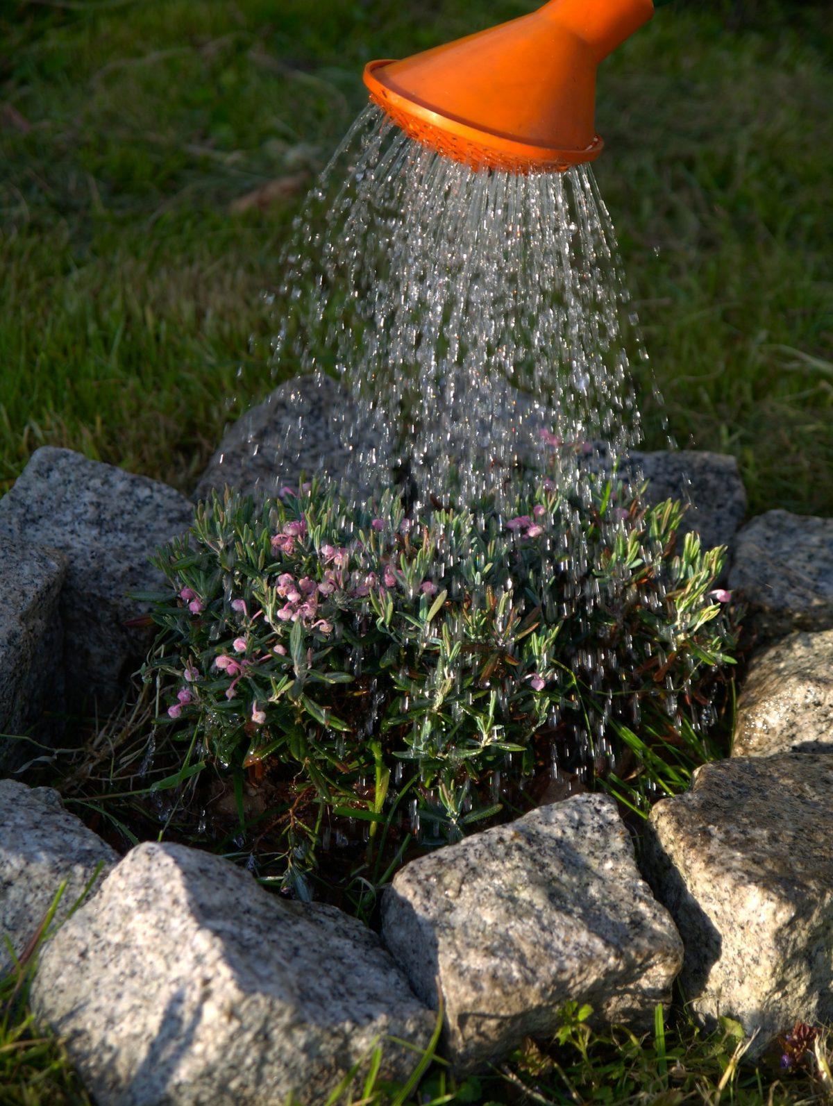 watering-323885_1920