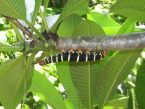 caterpillar-1126765_1920
