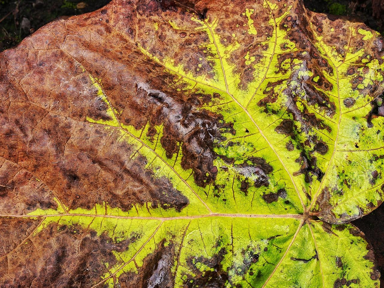leaf-1769422_1280